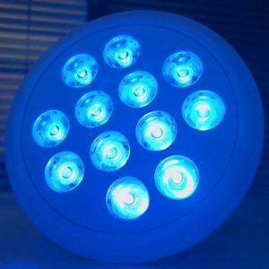 Par 38 Blue Bacteria Light